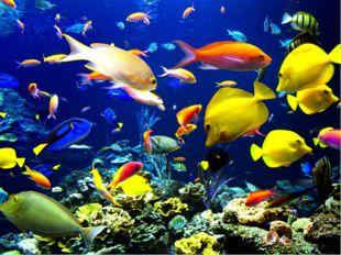 Рыбы достигли поразительного разнообразия и причудливости форм.