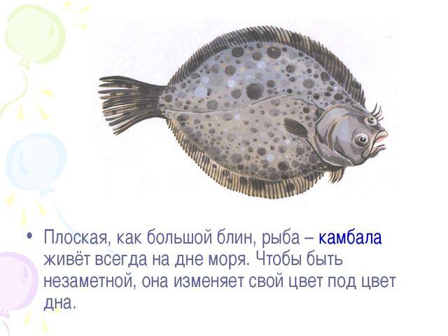 Плоская, как большой блин, рыба – камбала живёт всегда на дне моря. Чтобы быт...