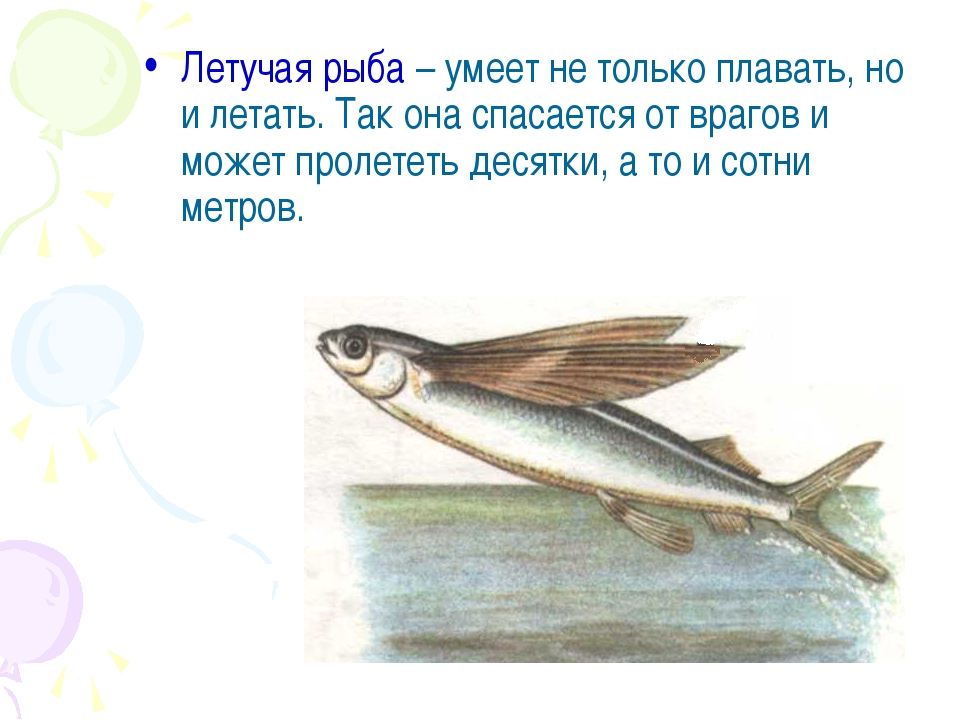 Летучая рыба – умеет не только плавать, но и летать. Так она спасается от вра...