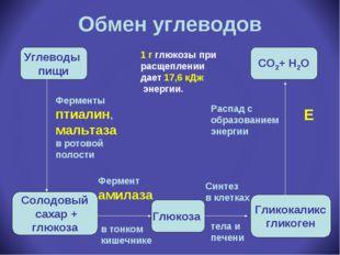 Обмен углеводов Углеводы пищи Солодовый сахар + глюкоза Глюкоза Гликокаликс г