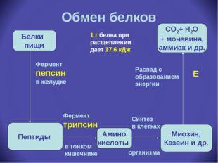 Обмен белков Белки пищи Пептиды Амино кислоты Миозин, Казеин и др. СО2+ Н2О +