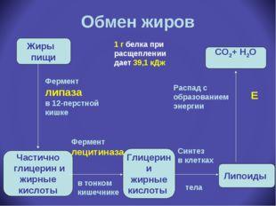 Обмен жиров Жиры пищи Частично глицерин и жирные кислоты Глицерин и жирные ки