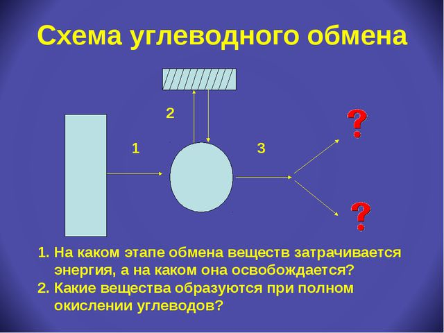 Схема углеводного обмена На каком этапе обмена веществ затрачивается энергия,...