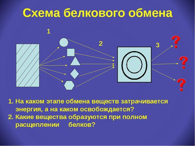 Схема белкового обмена 1 2 3 На каком этапе обмена веществ затрачивается энер...