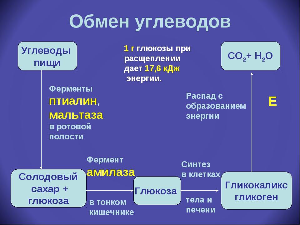 Обмен углеводов Углеводы пищи Солодовый сахар + глюкоза Глюкоза Гликокаликс г...