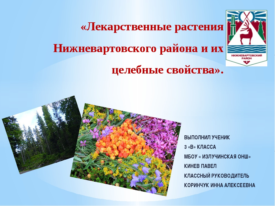 «Лекарственные растения Нижневартовского района и их целебные свойства». ВЫПО...