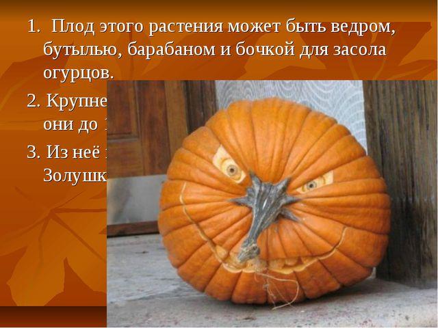 1. Плод этого растения может быть ведром, бутылью, барабаном и бочкой для зас...