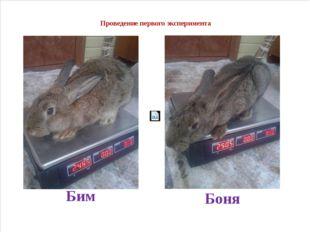 Проведение первого эксперимента Бим Боня
