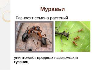 Муравьи Разносят семена растений уничтожают вредных насекомых и гусениц