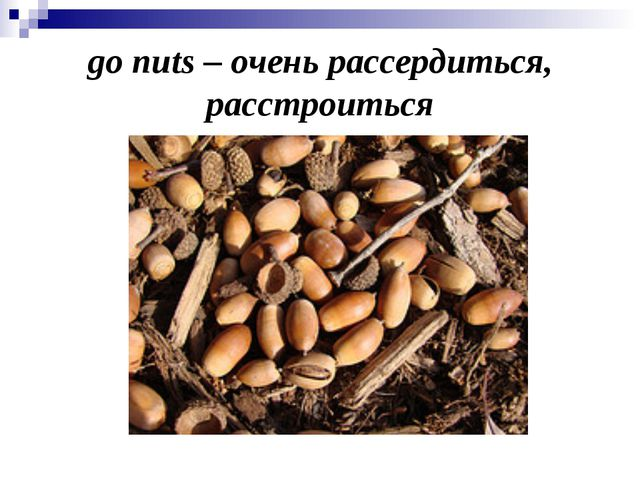 go nuts – очень рассердиться, расстроиться