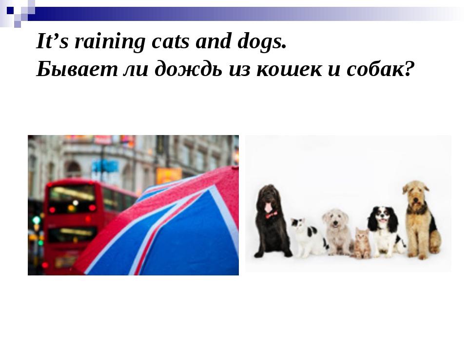 It's raining cats and dogs. Бывает ли дождь из кошек и собак?