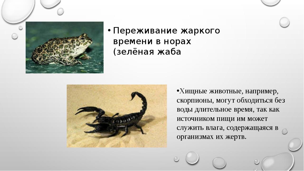 Переживание жаркого времени в норах (зелёная жаба Хищные животные, например,...