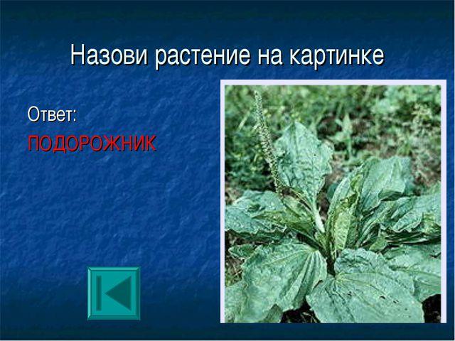 Назови растение на картинке Ответ: ПОДОРОЖНИК