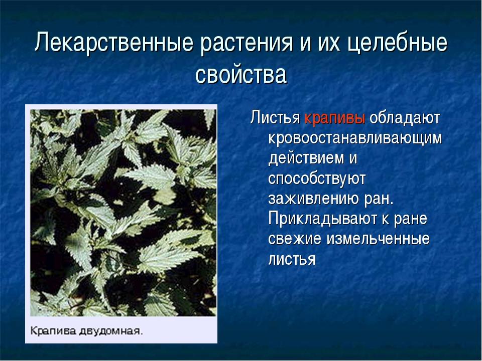 Лекарственные растения и их целебные свойства Листья крапивы обладают кровоос...