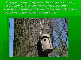Следует также подумать о безопасности птиц: отсутствие близко расположенных