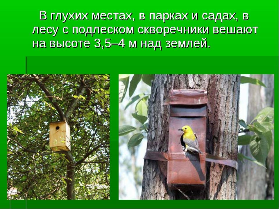 В глухих местах, в парках и садах, в лесу с подлеском скворечники вешают на...