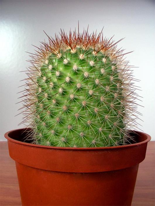 http://www.web-4-u.ru/hirurgiya/userfiles/image/kaktus.jpg