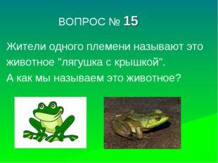 """ВОПРОС № 15 Жители одного племени называют это животное """"лягушка с крышкой""""."""