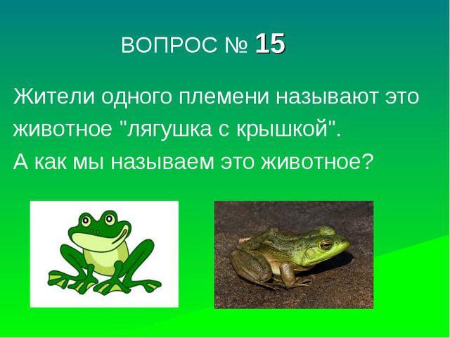 """ВОПРОС № 15 Жители одного племени называют это животное """"лягушка с крышкой""""...."""