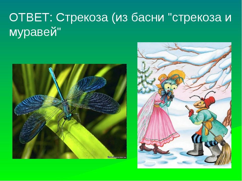 """ОТВЕТ: Стрекоза (из басни """"стрекоза и муравей"""""""