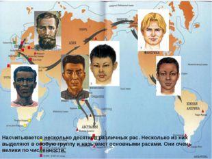 Насчитывается несколько десятков различных рас. Несколько из них выделяют в о