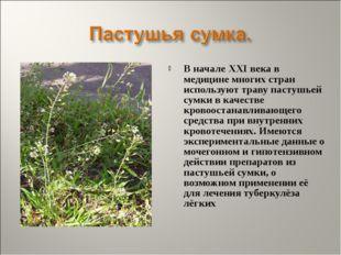 В начале XXI века в медицине многих стран используют траву пастушьей сумки в