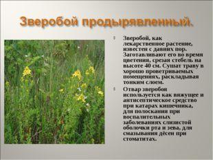 Зверобой, как лекарственное растение, известен с давних пор. Заготавливают ег
