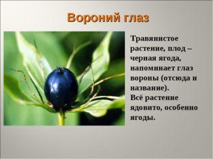 Вороний глаз Травянистое растение, плод – черная ягода, напоминает глаз ворон