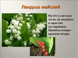 Ландыш майский Растёт в светлых лесах, на опушках, в зарослях кустарников. Яд