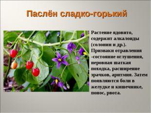 Паслён сладко-горький Растение ядовито, содержит алкалоиды (солонин и др.). П