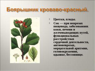 Цветки, плоды. Сок — при неврозах пищевода, заболеваниях кожи, печени и желче