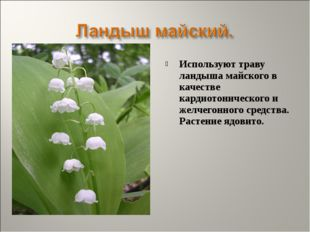Используют траву ландыша майского в качестве кардиотонического и желчегонного