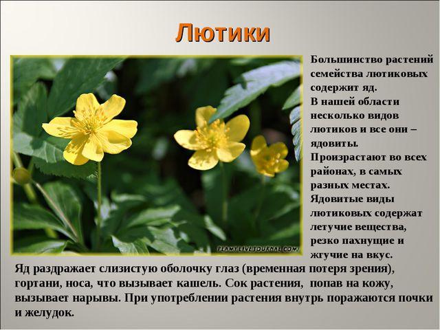 Лютики Большинство растений семейства лютиковых содержит яд. В нашей области...