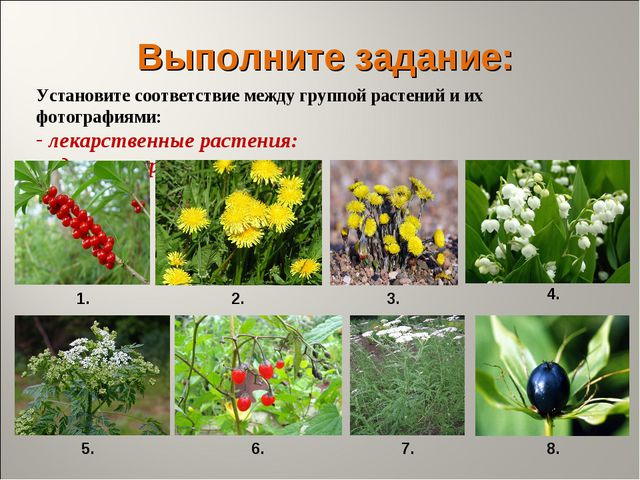 Выполните задание: Установите соответствие между группой растений и их фотогр...