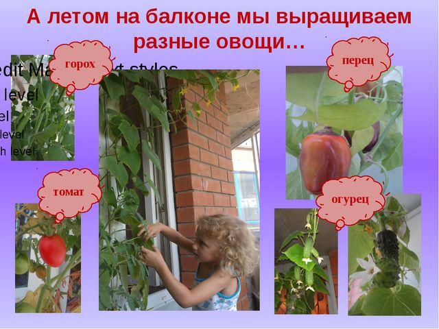 А летом на балконе мы выращиваем разные овощи… горох томат перец огурец