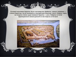 Основой экономики Хараппы было скотоводство (буйволы, свиньи, возможно — слон