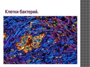 Клетки бактерий.