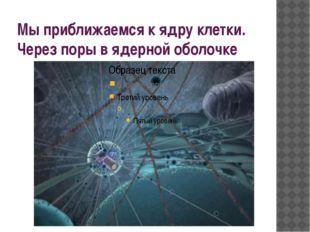 Мы приближаемся к ядру клетки. Через поры в ядерной оболочке