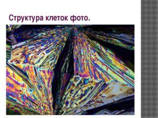 Структура клеток фото.