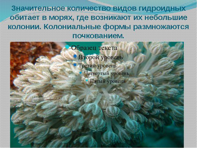 Значительное количество видов гидроидных обитает в морях, где возникают их не...