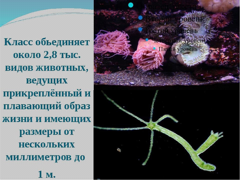 Класс обьединяет около 2,8 тыс. видов животных, ведущих прикреплённый и плав...