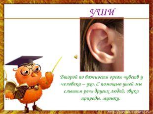 УШИ Второй по важности орган чувств у человека – ухо. С помощью ушей мы слыши