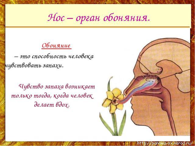 Нос – орган обоняния. Обоняние – это способность человека чувствовать запах...
