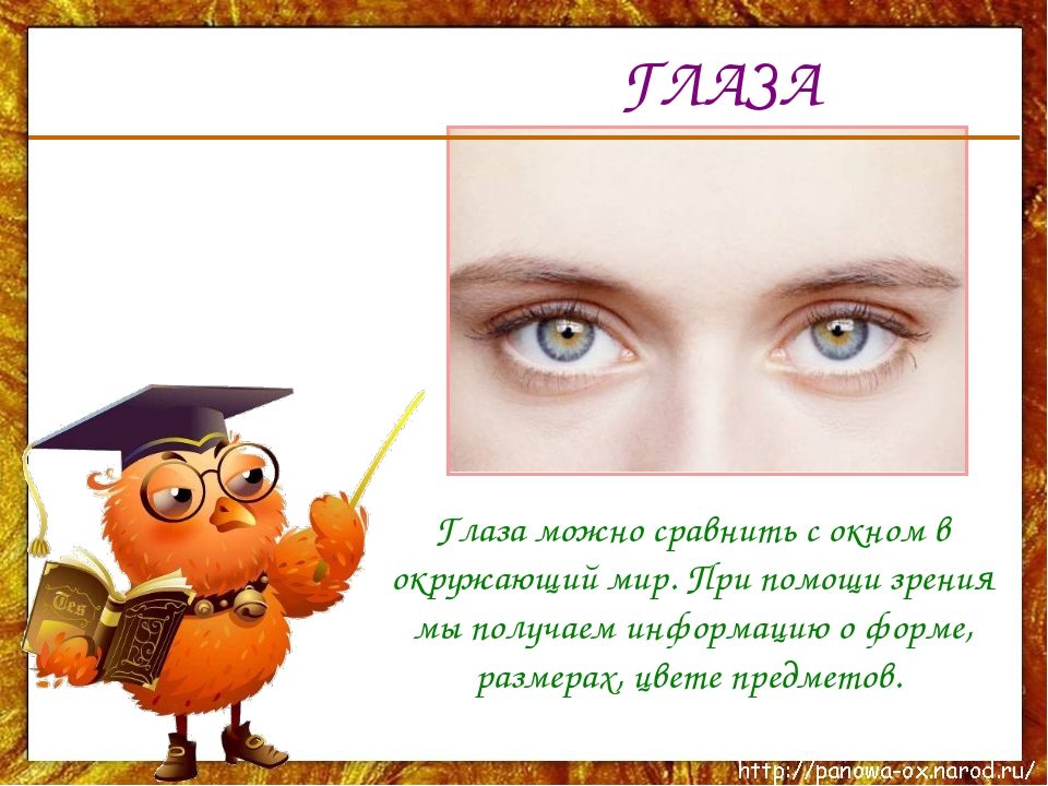 ГЛАЗА Глаза можно сравнить с окном в окружающий мир. При помощи зрения мы пол...