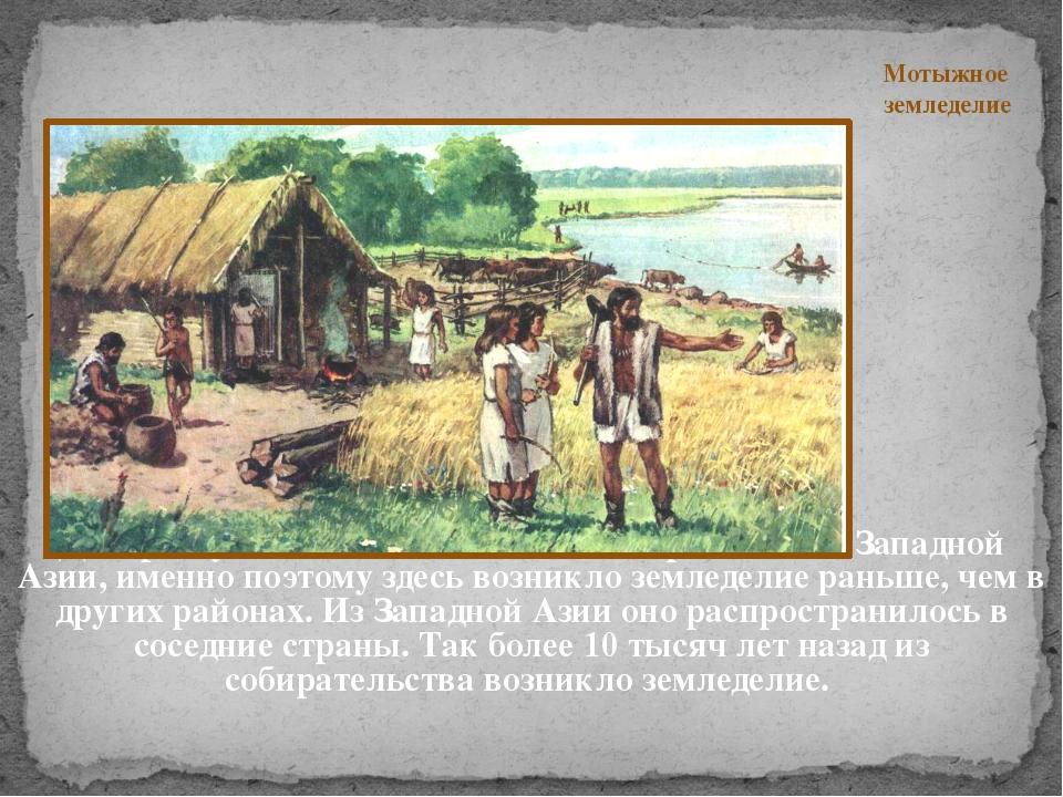 Дикорастущие ячмень и пшеница встречаются в Западной Азии, именно поэтому зд...