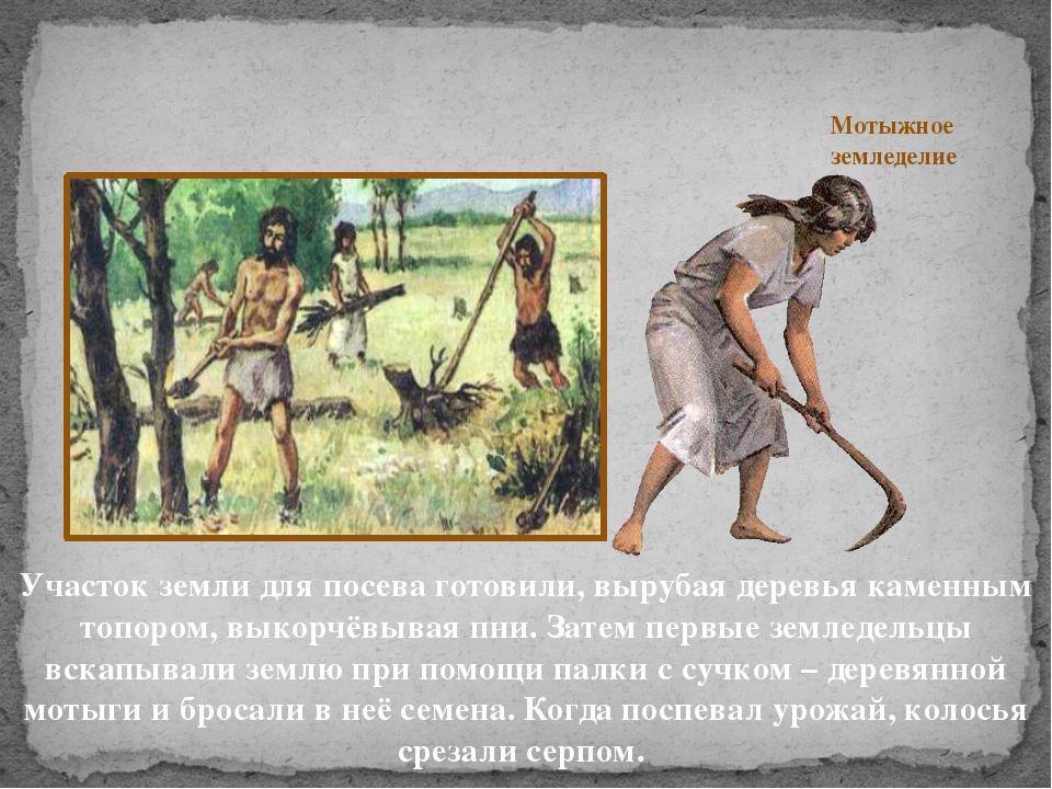 Участок земли для посева готовили, вырубая деревья каменным топором, выкорчё...