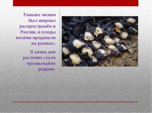 Раньше чилим был широко распространён в России, и плоды возами продавали на р