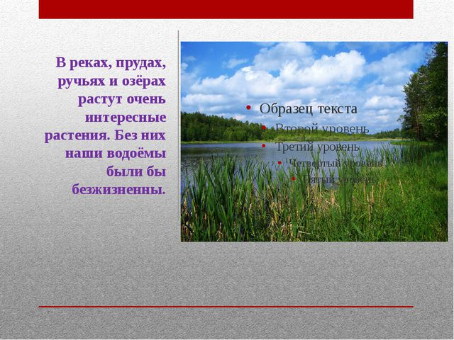 В реках, прудах, ручьях и озёрах растут очень интересные растения. Без них на...