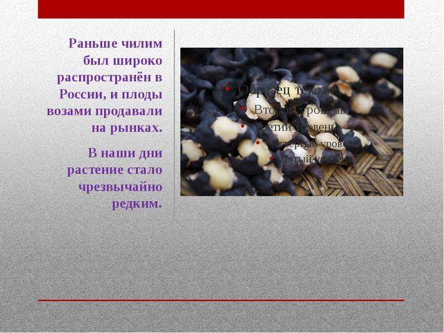 Раньше чилим был широко распространён в России, и плоды возами продавали на р...