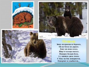 Медведь Зиму он проспал в берлоге, Он не бегал по дороге. Лапу он свою сосал.